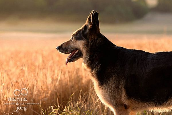 Hundefoto - Fotograf für Laubach